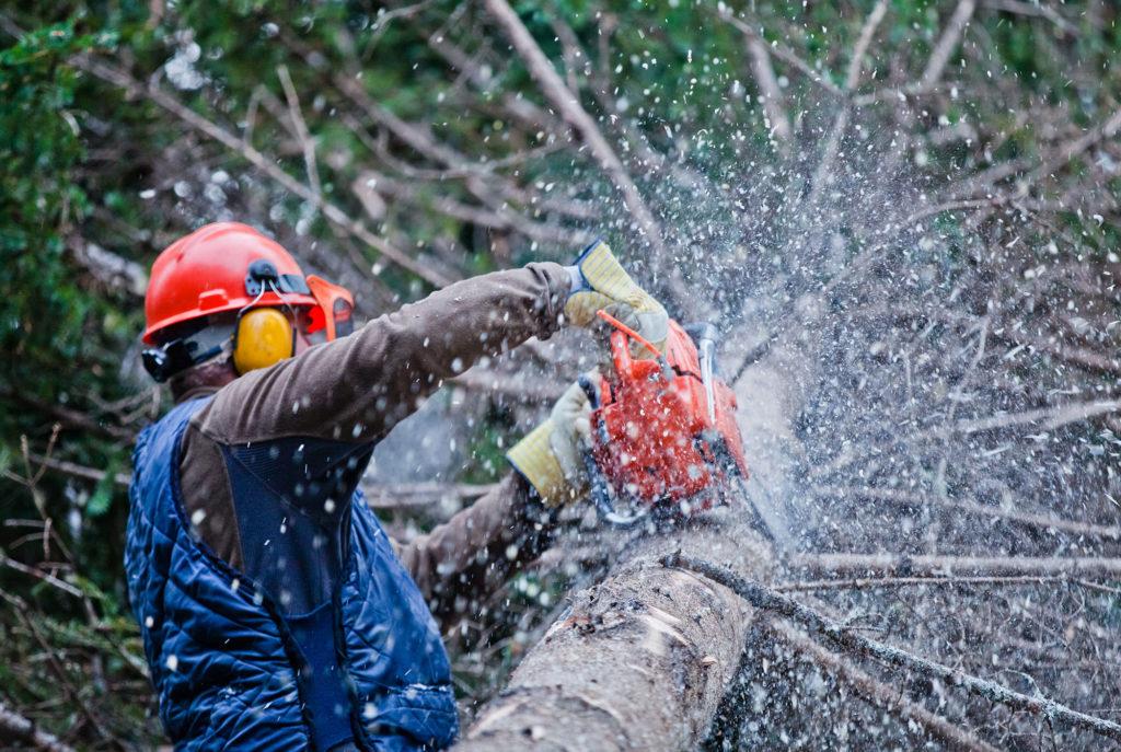 Baumdienst - Baumfällung Willich